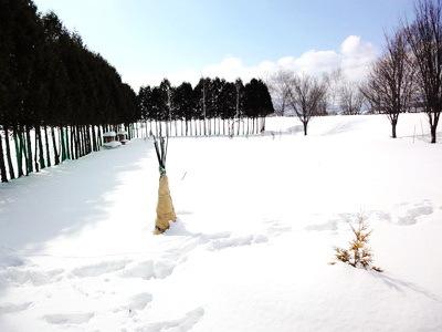 mienai garden .JPG